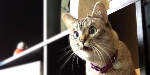 O CATS facebook