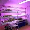 「日本印の野菜工場」ベトナムで野菜工場は需要ありそう。