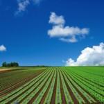 ブラジル農業の生産性をあげたのは日本人だった?高生産社会のヒント